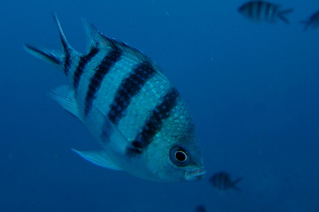 Fish on Koh Phangan